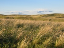 laituri_grasslands